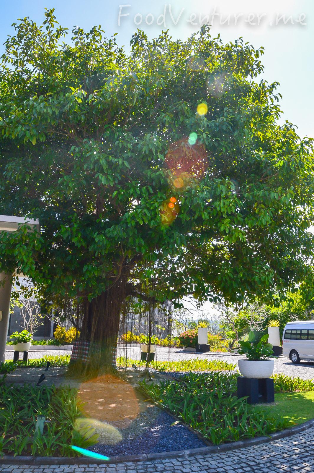 A Short Stop At Jumana Bar The Banyan Tree